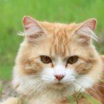 Katzenkastrationsaktion vom 15.02. – 15.03.2021